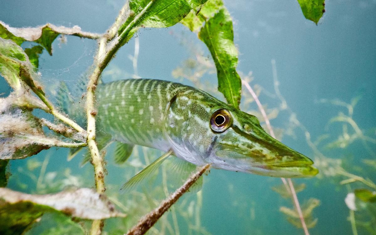 Vissenonderzoek